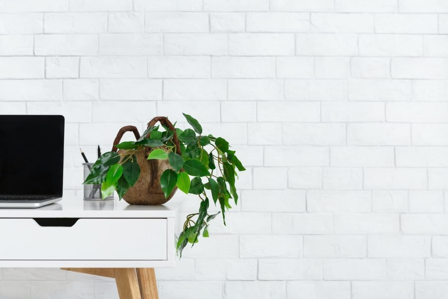 Minimalistic home office. Workplace with houseplant and laptop